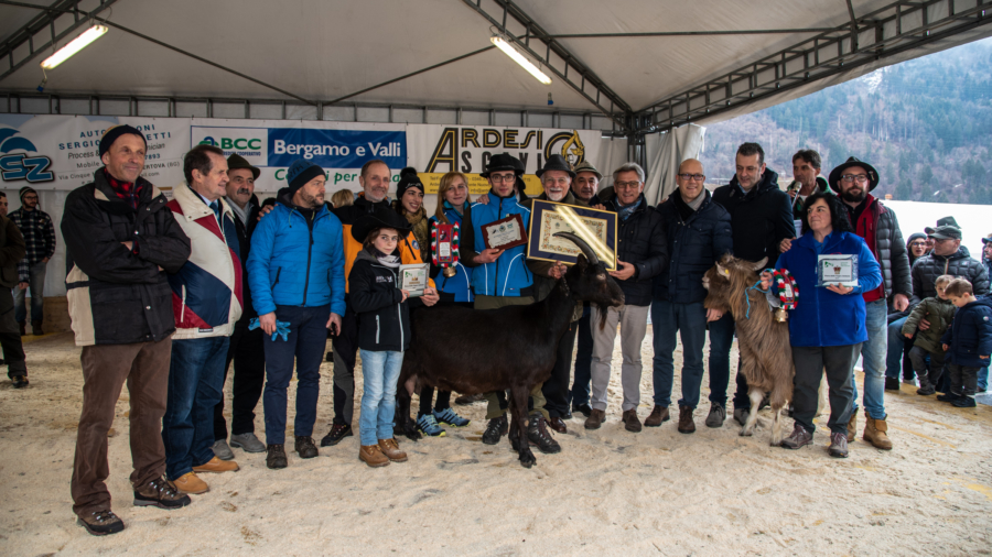 Fiera delle capre 2019 ardesio